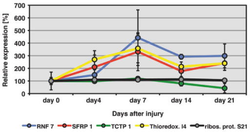 Expression profiles of selected mRNAs during newt heart regeneration. Expression of RNF 7, SFRP 1, Thioredoxin-like protein 4B and TCTP 1 was analysed by RT-PCR at 4, 7, 14 and 21 days after mechanical injury of newt ventricles (n = 3 for each time point). Expression of ribosomal protein S21 was analyzed as a non-modulated control. A more than 2 fold change in expression level was detected for all 4 selected genes during the newt heart regeneration. Statistically significant changes in expression (p < 0.05 by paired students t-test) were detected for RNF 7 and SFRP 1 at 14 and 21 days after injury and 7 and 14 days after injury for Thioredoxin-like protein 4B. Error bars are shown as ± STDEV. Please note that selected newt genes were so far not identified in regenerating zebrafish hearts.