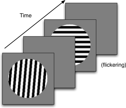 The sequence of images for a simulated trial in Experiment 1. The							orientation of the first stimulus varied from trial to trial. Any after							images were measured during the second blank frame.