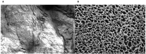 Collagen matrix with (a) and without (b) VEGF, SEM (100×); the smear layer coffering the surface of the collagen matrix can be seen on the left picture.
