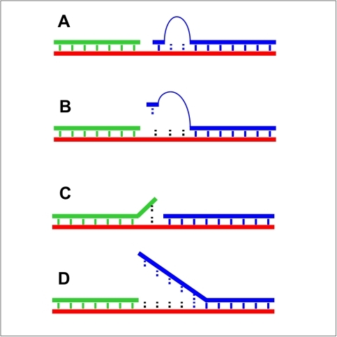 Matched and mismatched ligation junctions.A) Minimal ligation junction with Watson-Crick paired tethered mononucleotide using the A2Y or T2Y bridge. B) Single nucleotide mismatch in the minimal ligation junction such as those in lanes 3–5 of Figure 4A, C) Single nucleotide mismatch on the upstream side of the ligation junction (not efficiently ligated by T4 DNA ligase), and D) Up to 5 nt DNA mismatches on the downstream side of the ligation junction (ligated at moderate efficiency by T4 DNA ligase at low ATP concentrations).