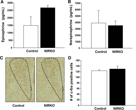NIRKO mice display normal physiological responses to heat stress. NIRKO (n = 6, closed bars) and littermate controls (n = 6, open bars) were subjected to heat stress for 90 min. A and B: Plasma epinephrine (A) and norepinephrine (B) levels were not significantly different between NIRKO and control mice. C: Representative images of matched hypothalamic sections highlighting heat stress induced c-fos staining in the PVN. D: The quantity of c-fos positive cells was similar between NIRKO and controls. (A high-quality color representation of this figure is available in the online issue.)