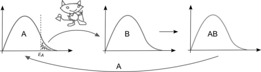 "Illustration of Maxwell's Demon and Landauer's principle. The Demon/enzyme selectively picks ""A"" molecules with sufficient energy to react with reactant ""B"", which leads to product ""AB"". This process slightly cools the ""A"" population. This loss of heat is put back into the system by the surrounding Universe. During degradation/erasure of ""AB"", ""A"" goes back into its population and this heat can be measured using methods like isothermal calorimetry"