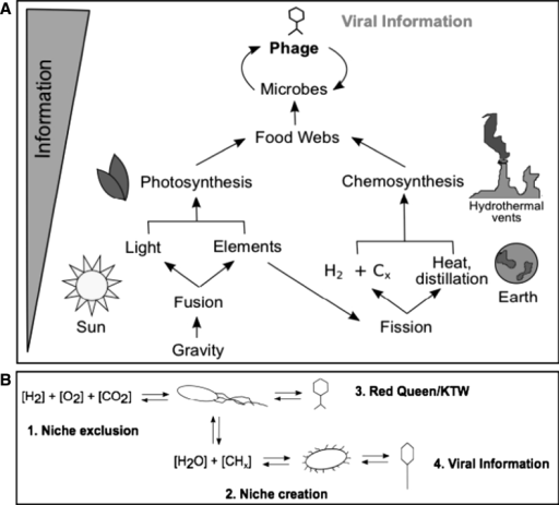 From gravity to viral information: dust to phage. a Schematic of how gravity leads to viral information. b Schematic of how viruses shape ecology (1-3) and evolution (3), leading to diversification and an increase of viral information (4)