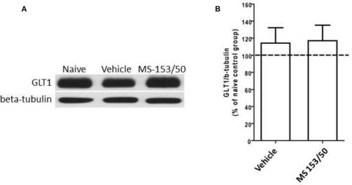 Effects of MS-153 (50 mg/kg) on GLT1 expression in PFC. (A) Immunoblots for GLT1 and β-tubulin, which was used as a control loading protein, in the PFC after 1 day of the last i.p. injection of MS-153. (B) Quantitative analysis did not reveal any significant differences in the ratio of GLT1/β-tubulin among all groups. Values shown as means ± s.e.m. (n = 5 for each group).