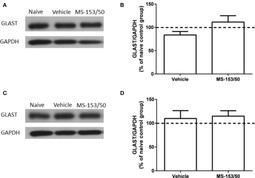 Effects of MS-153 (50 mg/kg) on GLAST expression in PFC and NAc. (A,C) Immunoblots for GLAST and GAPDH, which was used as a control loading protein, in the PFC and NAc, respectively. (B,D) Quantitative analysis did not reveal any significant differences in the ratio of GLAST/GAPDH among all groups in PFC and NAc, respectively. Values shown as means ± s.e.m. (n = 5 for each group).