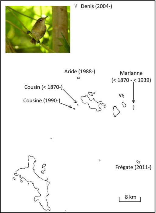 Population history of the Seychelles warbler (pictured inset). Dates represent first dates that Seychelles warblers were present on individual islands, and the last known date on Marianne, where the warbler was known to exist but is now extinct. Note that populations on Cousine, Aride, Denis and Frégate were established by translocations.