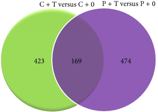 Venn diagrams showing the number of gene transcripts in seedlings grown in ultrahigh diluted As2O3 as compared to their respective control in both poisoned (P + T versus P + 0) and unpoisoned (C + T versus C + 0) experimental sets.