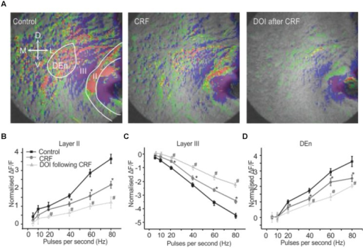 Activation of CRFR1 before the application of DOI potentiated the CRF effects. Representative images in (A) show control (left), after the application of CRF (middle) and the subsequent application of DOI following CRF (right). The image on right was taken after 15 min of perfusion with CRF. In (B–D) we show quantitation of CRFR1 and 5-HT2A/CR activation over the range of stimulation frequencies used to activate the circuit. *#p < 0.01. *CRF effect is significantly different compared to control. # DOI following CRF effect is significantly different from CRF. DOI was immediately applied after the CRF application was stopped. However, there was at least 15–17 min time lapse between when the DOI application was started and the slice was stimulated for the recording. The perfusion bath emptying rate was maintained at 1 ml per min. When DOI was added in the absence of CRF.