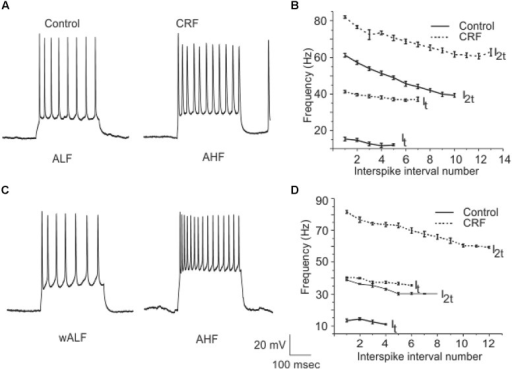 A subpopulation of interneurons from Layer III increased their firing frequency after the application of CRF. In (A) we show an example of ALF interneuron that converted to AHF firing pattern after the application of CRF. The graphs in (B) show the average of firing frequency against interspike interval number from 14 ALF at one times threshold and two times threshold (It and I2t respectively). (C) Shows an example of a wALF (weakly adapting low frequency) interneuron that converted to AHF type after the application of CRF. A plot of the average of firing frequency against interspike interval number from the five ALF interneurons that converted to AHF after the application of CRF is shown in (D).