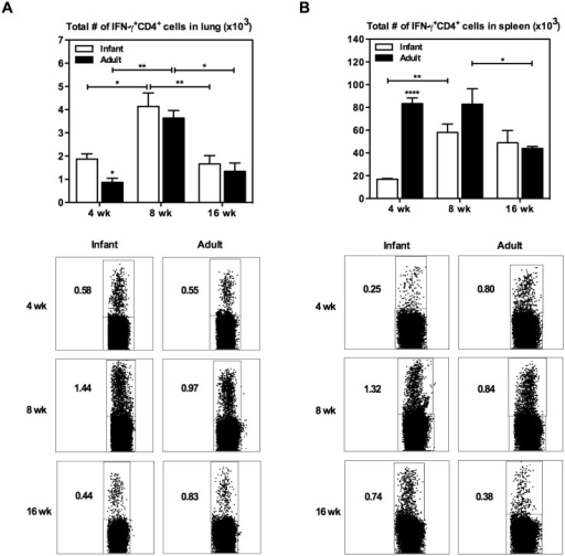 IFN-γ+CD4+ T cell kinetics in the lung and spleen of infant and adult mice following BCG immunization.Infant and adult mice were immunized s.c. with BCG and sacrificed at 4, 8, or 16 weeks following immunization. Cells from the lung (A) and spleen (B) were isolated and stimulated with mixed M.tb culture filtrate (CF) and crude BCG (cBCG) for 24h or with media only as a control (unstimulated). Cells were stained with extracellular cell markers, followed by intracellular staining for IFN-γ, and analyzed by flow cytometry. Absolute numbers of IFN-γ+CD4+ T cells in the tissues were calculated (unstimulated numbers were subtracted from stimulated), and representative dot plots are shown. Results are from one to two independent experiments per timepoint, n = 4-8/group/timepoint. Data are expressed as Mean ± SEM. *, p < 0.05; **, p < 0.005; ****, p < 0.0001.