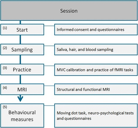 Flowchart of fMRI session day. MVC = Maximal voluntaty contraction, MRI = Magnetic resonance imaging, fMRI = functional MRI
