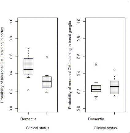 (a) (left) Probability of cortical neuronal staining vs. clinical dementia status. Box plots compare demented and undemented subjects. (b) (right) Probability of basal ganglia staining vs. clinical dementia status. The probability of CML staining in basal ganglia neurons did not differ between the two groups.