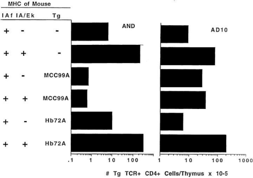 IEk-99A causes the clonal deletion of T cells bearing canonical IEk + MCC–reactive TCRs. Animals expressing the AND or AD10  TCR transgenes were crossed with 72ATg or 99ATg mice, and the animals were intercrossed such that some were H2fxk and others were H2f  homozygous. Thymocytes from these animals were stained with anti-Vα11, anti-Vβ3, and CD4. The counts are those of cells/thymus-bearing  CD4 and high levels of Vα11 and Vβ3. The results shown are the averages of between one and three mice of each type.