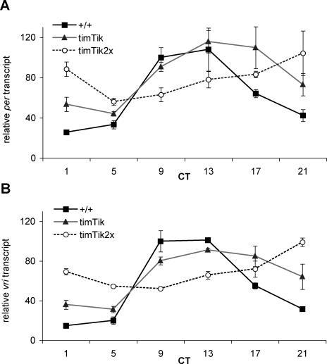 Circadian CK2α Loss of Function Impacts Clock Gene RNA Levels(A) Overexpression of one copy of UASTik leads to elevated levels of per transcript during early subjective night, while further diminishing CK2α function with two copies each of timGal4 and UASTik greatly diminishes the amplitude of per RNA cycling.(B) Analysis of vri transcript reveals a similar pattern of delayed and dampened transcript persistence when CK2α activity is inhibited in circadian cells. +/+: y w, timTik: timGal4/+; UASTikT1/+; timTik2x: timGal4; UASTikT1. CT: circadian time. Values obtained from two to three independent experiments.