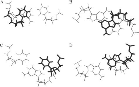 Stacking of bases on wobble GU base pairs. (A) View down the helix axis of  (B) View down helix axis of . (C) View down helix axis of . (D) View down helix axis of . The dangling bases are shown as the nearer base and are drawn in bold. Examples are taken from the NMR structure of the P1 helix of the group I intron (44).