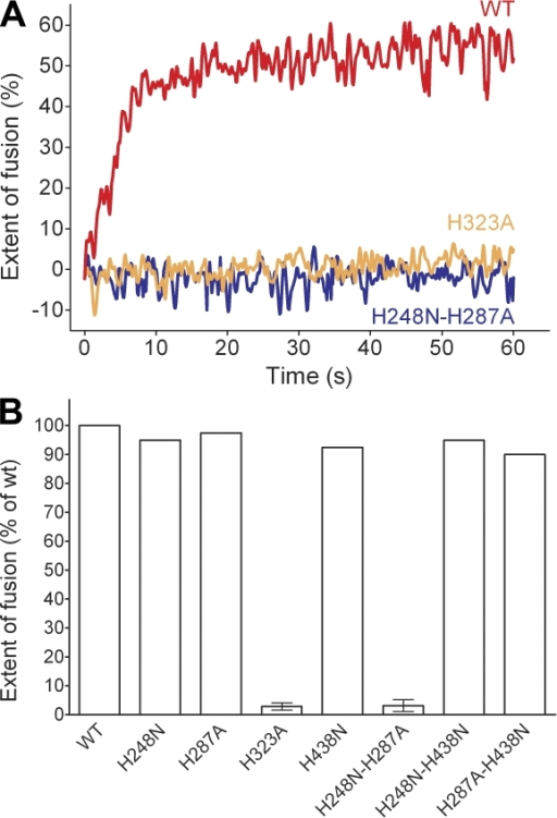 Fusion activity of pyrene-labeled WT and mutant RSPs with liposomes at acidic pH. (A) Kinetic fusion curves of RSP WT (red) and the mutant RSPs H323A (orange) and H248N-H287A (blue) at pH 5.4. (B) Extent of fusion after 60 s of mutant RSPs relative to that of the WT (set at 100%). The experiments with those mutants that were significantly different from the WT were performed at least twice and the error bars represent the standard errors of the means.