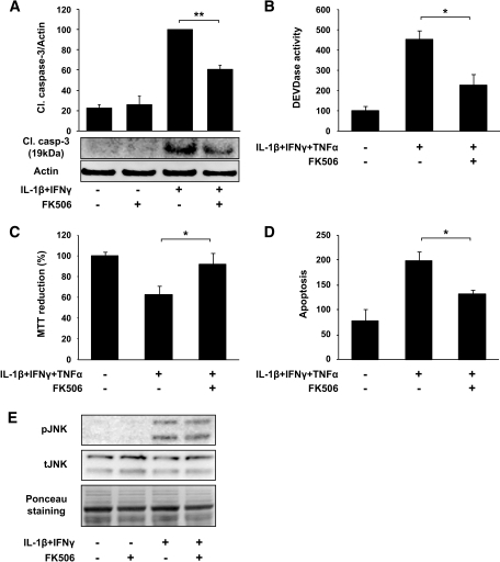 FK506 inhibits cytokine-induced cleavage of capase-3 in rat islets, DEVDase activity, mitochondrial metabolic activity, and apoptosis in human islets. Cells were pre-exposed to FK506 (1 μmol/l) for 1 h before exposure to cytokines for 24 h. A: Cleavage of caspase-3 in rat islets was assessed by immunoblotting. Bars represent mean ± SE of four independent experiments, and representative gels are shown (actin is used as a loading control). B: DEVDase activity in human islets was measured as described in research design and methods. Bars represent mean ± SE of three independent experiments. C: Mitochondrial metabolic activity in human islets was measured using the MTT assay as described in research design and methods. Bars represent mean ± SE of four independent experiments. D: Apoptosis in human islets was measured with the cell death detection assay as described in research design and methods. Data are presented as means ± SE of three independent experiments. E: Phosphorylation of JNK was detected by immunoblotting in INS-1 cells exposed to IL-1β + IFN-γ with or without pre-exposure to FK506 for 1 h. A representative blot of two independent experiments is shown, and Ponceau staining was used to confirm equal protein loading. *P < 0.05; ** P < 0.01.