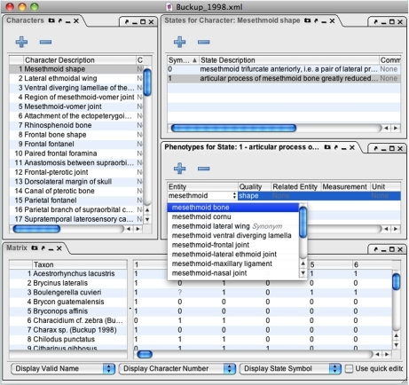 Phenex screenshot of window configured with panels for editing of character and character states data, phenotypes (i.e. EQ statements), and character-by-taxon matrix.