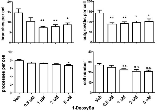 The atypical sphingoid base 1-deoxySa reduced neuritic branches and outgrowth in primary DA neurons. Primary neuron-glia cultures from rat ventral mesencephalon were plated in 96-well plates and exposed to treatment media alone without BSA (0) or to 1-deoxysphinganine (1-deoxySa) at the concentrations indicated in a complex with BSA (25 μM) for 48 hours prior to assessing number of branches per cell, number of processes, and number of outgrowths per cell as well as cell number using Image Xpress high-content imaging analyses. 1-DeoxySa was the only one of the sphingoid bases tested that reduced neurite outgrowth and branching. All values represent group means +/− SEM, n = 3–4. One-way ANOVA with Tukey's post-hoc' * denotes difference from treatment media alone at p < 0.05, and ** denotes p < 0.01. N.S. denotes not significant.