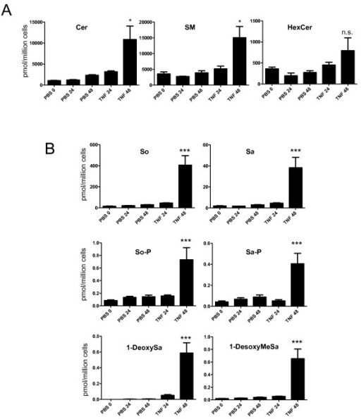 TNF treatment induces accumulation of ceramide and several atypical sphingoid bases (DBS) in MN9D dopaminergic (DA) neuroblastoma cells derived from mouse ventral mesencephalon. MN9D cells were treated with PBS or 5 ng/mL TNF for 24 or 48 hours as indicated prior to cell harvest for lipid extraction as described in Methods. A, Lipidomic analyses indicate time-dependent accumulation of ceramide (Cer), sphingomyelin (SM), and hexosylceramide (HexCer) in TNF-treated cells relative to PBS-treated cells. B, Lipidomic analyses also revealed time-dependent accumulation of sphingosine (So), sphinganine (Sa), sphingosine-phosphate (SoP), sphinganine-phosphate (SaP), 1-deoxysphinganine (1-deoxySa), and 1-desoxymethylsphinganine (1-desoxyMeSa) after treatment with TNF. All values represent group means +/− SEM, n = 3. One-way ANOVA with Tukey's post-hoc test; *** denotes p < 0.001 and * denotes p < 0.05 compared to PBS at 48 hrs. N.S. denotes not significant.