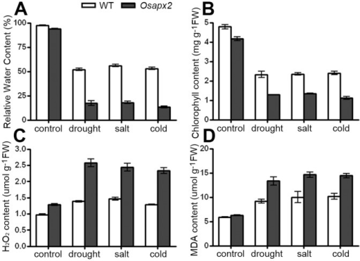 The effects of stress treatments on wild-type and Osapx2 plants.A: Relative water content. B: Chlorophyll content. C: H2O2 content. D: MDA content. Values represent the mean ± SD of three replicates.