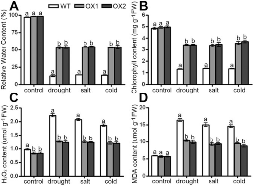 The effects of stress treatments on wild-type and OsAPX2-OX plants.A: Relative water content. B: Chlorophyll content. C: H2O2 content. D: MDA content. Data are mean of three replicates and were compared by one-way analysis of variance and Duncan's multiple range test. Different letters (a–b) indicate significant differences (P<0.05) between lines.