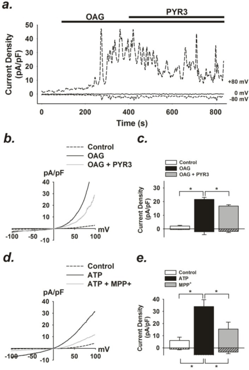 OAG- and ATP-induced currents in striatal astrocytes.(a) Representative time course of OAG (100 µM) -induced whole-cell currents at +80, 0, and −80 mV and in response to TRPC3 inhibitor, pyrazole-3 (Pyr3, 10 µM) in striatal astrocytes. (b) Current (I) vs. voltage (V) relationship of baseline and OAG-induced currents in absence and presence of Pyr3. (c) Summary data of average current density at +80 and −80 mV before and following OAG stimulation and after administration of Pyr3. n  =  5. (*p <0.05). (c) Current (I) vs. voltage (V) relationship of baseline and ATP (1 µM) -induced currents in striatal astrocytes in absence and presence of MPP+ (100 µM). (d) Summary data of average current density at +80 and −80 mV before and following ATP (1 µM) stimulation and after administration of MPP+ (100 µM). n  =  3. (*p <0.05).