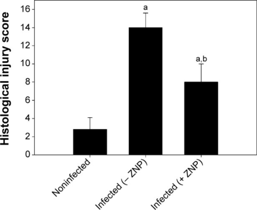 ZNP induced changes in the total histological injury score in jejunum of noninfected and Eimeria papillata-infected mice.Notes: Scores were calculated according to Dommels et al.13 Values are expressed as mean ± SD. aSignificant in respect to the noninfected (− ZNP) group (P≤0.05); bsignificant in respect to the infected (− ZNP) group (P≤0.05).Abbreviations: SD, standard deviation; ZNP, zinc oxide nanoparticle.