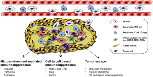 Immune evasion and immunosuppressive in the tumor microenvironment.