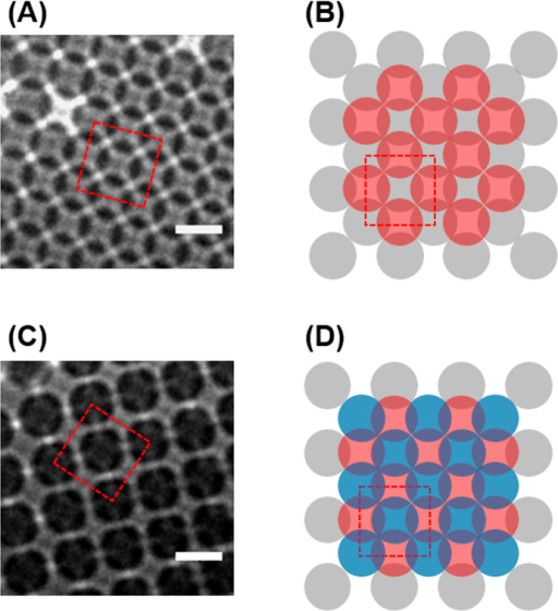 TXM images of (A) double and (C) triple layered (100) face FCC structures of PCs (scale bar of 1 μm). CAD drawn model structures of (B) double and (D) triple layers.