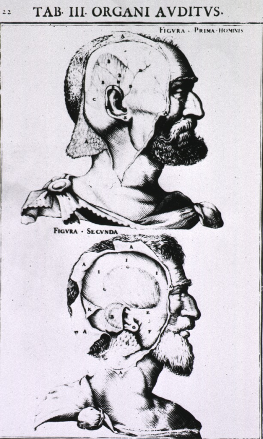 <p>Two figures showing a human head in right profile with the area around the ear exposed.</p>