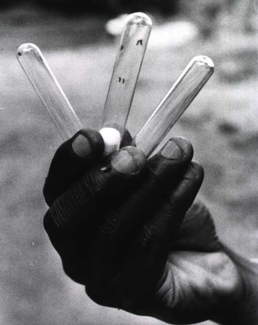 <p>A human hand holding three test tubes containing black flies.</p>
