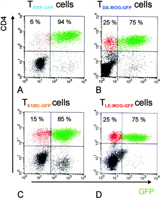 Relative numbers of TGFP cells infiltrating the CNS in the course of tEAE. The number of CNS-infiltrating GFP-positive T cells in the CD4+ cell population was analyzed 4 d after transfer. TMBP-GFP (A), TDA-MOG-GFP (B), TS100β-GFP (C), and TLE-MOG-GFP (D) cells are shown. The majority of CD4+ T cells were GFP positive in all cell lines tested. Representative data of at least three independent experiments/TCLs are shown.