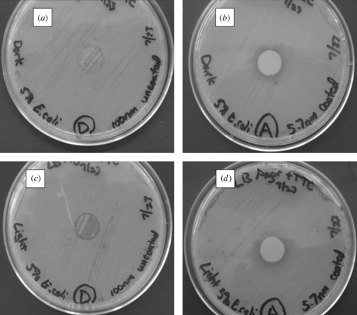 Light microscopy images of agar plating assay results after 24 h of incubation. Materials were examined on Luria–Bertani agar plates, which were inoculated with E. coli. (a) Uncoated 100 nm pore size nanoporous alumina membrane without light exposure. (b) Zinc oxide-coated (coating= 5 nm) 100 nm pore size nanoporous alumina membrane without light exposure. (c) Uncoated 100 nm pore size nanoporous alumina membrane under continuous light exposure. (d) Zinc oxide-coated (coating= 5 nm) 100 nm pore size nanoporous alumina membrane under continuous light exposure.