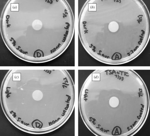 Light microscopy images of agar plating assay results after 24 h of incubation. Materials were examined on tryptic soy agar plates, which were inoculated with S. aureus. (a) Uncoated 100 nm pore size nanoporous alumina membrane without light exposure. (b) Zinc oxide-coated (coating= 5 nm) 100 nm pore size nanoporous alumina membrane without light exposure. (c) Uncoated 100 nm pore size nanoporous alumina membrane under continuous light exposure. (d) Zinc oxide-coated (coating= 5 nm) 100 nm pore size nanoporous alumina membrane under continuous light exposure.