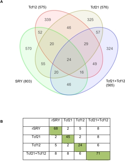 Transcriptome analysis of SRY and TCF21 actions.Venn diagram (A) with overlap of total gene sets (p<0.05) altered inresponse to various expression constraints (Sry,Tcf21, Tcf21 plusTcf12, Tcf12). Total genes in thegene sets and overlap numbers are presented. These gene sets arestatistically significant increase genes, but with no further cut-offparameters. (B) Restricted gene sets overlapped in female E13 culturesinvolving gene sets with altered expression with >1.2 fold change,p<0.05, and mean difference >10.