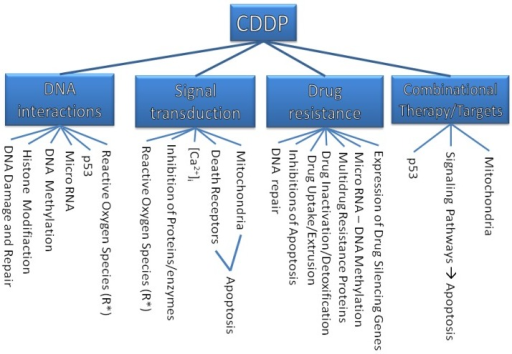 The targets of CDDP.
