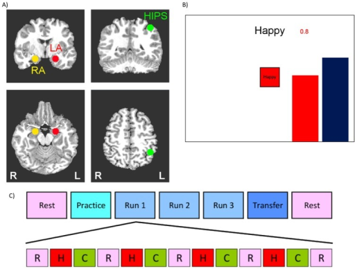 "Design of the rtfMRI neurofeedback experiment.A) Regions of Interest (ROI) for the rtfMRI neurofeedback procedure. Three regions of interest (spheres of 7 mm radius) were used to assess changes in BOLD activity. These regions were the left amygdala (LA, red, centered at -21, -5, -16), right amygdala (RA, yellow, centered at 21, -5, -16), and left horizontal segment of the intraparietal sulcus (HIPS, green, centered at -42, -48, 48). ROI placements are illustrated on T1-weighted coronal (upper row) and axial (lower row) human brain sections in Talairach space[48]. Following radiological notation, the left side (L) of the brain is shown on the right, and the right side (R) of the brain on the left. B) Real-time display screen for the rtfMRI neurofeedback procedure. During the Happy condition, the word ""Happy,"" two color bars, and a number indicating the neurofeedback signal were displayed on the screen. Participants were instructed to recall happy autobiographical memories to make themselves feel happy while trying to increase the level of the red bar representing the feedback signal from the target ROI to a given target level indicated by the fixed height of the blue bar (but not to exceed that target level). C) Protocol for the rtfMRI neurofeedback experiment. The experimental protocol consisted of seven runs each lasting 8 min 40 sec. During the Rest runs, participants were instructed to rest with their eyes open. During the Practice run, the participants were given the opportunity to become comfortable with the procedure and test out different memories. During Runs 1–3 participants underwent rtfMRI neurofeedback training consisting of alternating blocs of Rest (R, pink block), Happy (H, red block), and Count (C, green block, instructed to count backwards from 300 by a given integer), each lasting 40 sec. During the Transfer Run, participants were instructed to perform the same task as during the neurofeedback training, but no neurofeedback information (bars, numbers) was provided."