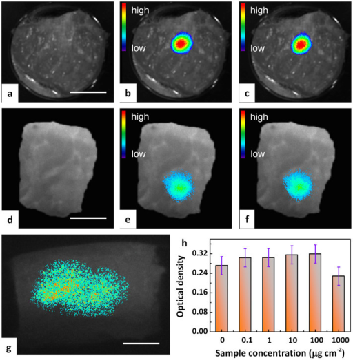 Anti-Stokes fluorescence tissues imaging of pork tissue with incoherent excitation.(a–c and g) show the application of ex situ optical charging, (d–f) represent X-ray in situ charging: (a) Pre-injection autofluorescence image. (b) 60 min post-injection fluorescence image and (c) representative reproduction of (b) after 1 on/off cycling. A 980 nm laser diode was employed as the excitation source and the monitoring wavelength was set at ~700 nm. (d) Post-injection autofluorescence image without charging. (e) Post-injection fluorescence image after external X-ray charging and (f) representative reproduction of (e) after 1 on/off cycling. (g) Deep and large-area fluorescence imaging of pork tissue for an injection depth of 1 cm. A 940 nm LED was employed as the excitation source for imaging and the monitoring wavelength was set at ~700 nm. Scale bars are 15 mm for panels a–g. (h) In-vitro viability of BMSCs (bone mesenchymal stem cells) incubated with particulate Zn3Ga2Ge2O10:0.5Cr3+ as anti-Stokes probe at different concentrations for 3 days. Each data point represents the mean value of at least three independent experiments.