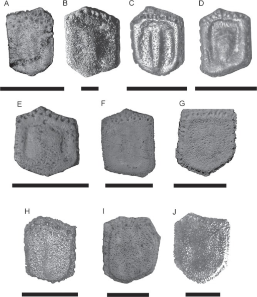 Comparison of fixed osteoderms.A,Scirrotherium hondaense (UCMP 37979), scale bars = 50 mm; B,S. antelucanus (CFM-2559), scale bars = 10 mm; C,S. carinatum (MLP 41-XII-13-905), scale bars = 30 mm; D,Kraglievichia paranensis (MLP 69-IX-8-13), scale bars = 30 mm; E,Vassallia minuta (MLP 69-XII-26-17), scale bars = 30 mm; F,Plaina intermedia (FMNH P 14424), scale bars = 30 mm; G,Pampatherium humboldtii (MLP 81-X-30-1), scale bars = 30 mm; H,Holmesina floridanus (UF 224397), scale bars = 30 mm; I,H. septentrionalis (AMNH 23435), scale bars = 30 mm; J,H. paulacouoti (holotype, MCL-501/110-126), scale bars = 30 mm.