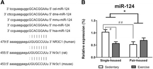 Impact of exercise and housing conditions on miR-124 levels at the hippocampus. a The mature sequence of miR-124 and the 3′ untranslated region of Nr3c1 are highly conserved across species, suggesting a critical functional link between them (miRNA seed sequence shown in capitals). b Expression of miR-124 for single-housed mice and pair-housed that exercised or remained sedentary. * p < 0.05 housing effect; # p < 0.05 post hoc comparison between sedentary single-housed mice and single-housed mice that exercise; # # p < 0.01 post hoc comparison between sedentary single-housed mice and sedentary pair-housed mice
