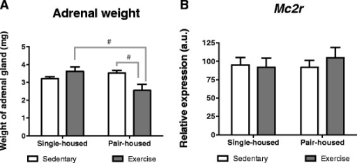Effect of exercise and housing conditions on adrenal gland weight and adrenal Mc2r expression. Expression for single-housed mice and pair-housed that either exercised or remained sedentary. a Adrenal gland weight and bMc2r expression. # p < 0.05