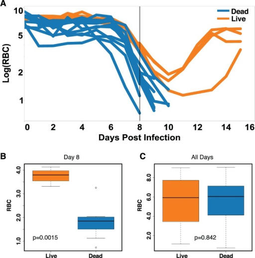 Prediction of mice fated to die based on anemia.(A) Time series data of RBCs for survivors (n = 4, orange) and non-survivors (n = 11, blue). (B–C) Box plots of RBC counts on day 8 (B) and all days (C) of the infection. Significant difference between conditions on day 8 p-value = 0.0015. The p-value when considering all of the time points was p = 0.842. Data provided in S1 Data.
