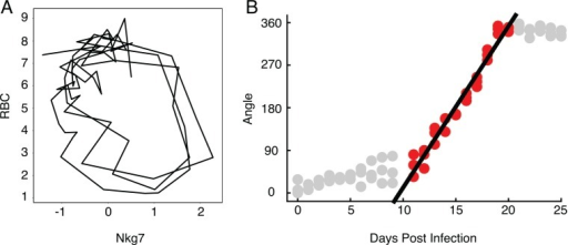 The relationship between time and angle in a disease map.(A) Disease map of live mice (n = 3) through Nkg7 by RBC space. (B) Linear correlation between angle and days post infection from day 11 to day 20 (r2 = 0.942). Only points colored red were included in the regression analysis. Data provided in S2 Data.