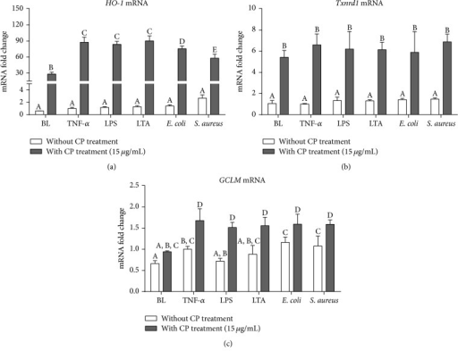 Effects of CP treatment on cellular antioxidant defense gene expressions following mastitis pathogen challenges in MAC-T cells. Quantitative PCR analysis of cellular antioxidant defense genes, HO-1 (a), Txnrd-1 (b), and GCLM (c), showing gene expressions after 6 h incubation of MAC-T cells with each different mastitis pathogen, including proinflammatory cytokine (TNF-α 25 ng/mL), bacterial cell wall components (LPS, 1 μg/mL; LTA, 10 μg/mL), and heat-killed mastitis strains (E. coli and S. aureus, 107 particles/mL). Ct values of target genes were normalized to the value of β-actin and relative gene expressions in TNF-α control group were arbitrarily set to one. The data are shown as mean ± SD from three independent experiments and were analyzed by one-way ANOVA with the Student-Newman-Keuls method. The means with different superscripts are significantly different (P < 0.05).
