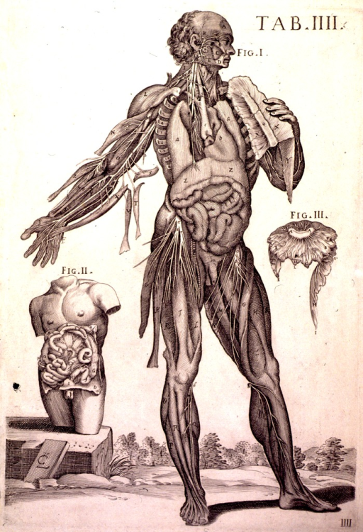 <p>The central image is a frontal cross-section of the body of a standing human male set in a landscape.  Each of the body parts is labeled with a letter of the alphabet.  There are two other figures (numbered 'II' and 'III') on either side of the central figure:  figure II is partial cross-section of a human male torso, with each part of the insides labeled with a letter of the alphabet; figure III is a cross section of another body part, with each part of it labeled like the other figures.</p>