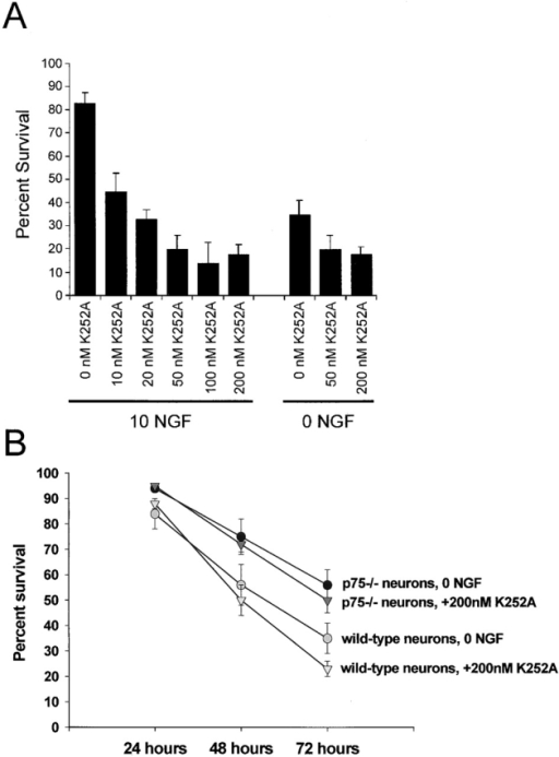 Cultured p75NTR−/− neurons show enhanced survival in the absence of all Trk signaling. (A) Percentage survival of mouse sympathetic neurons switched for 72 h into varying concentrations of K252A in the presence or absence of 10 ng/ml NGF. Results are normalized so that the number of neurons at the time of NGF withdrawal is 100%. Each point represents the values pooled from two to four independent experiments, each repeated in triplicate. Error bars represent the standard error of the mean. (B) Percentage survival of p75NTR−/− versus p75NTR+/+ (wild-type) neurons at various time points after a switch into 0 ng/ml NGF plus or minus 200 nM K252A. Results represent the mean ± standard error of combined data from four separate experiments, each performed in triplicate.