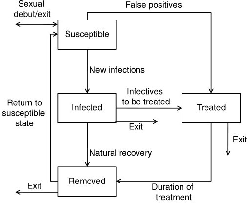 Schematic stock and flow diagram of the susceptible-inf | Open-i