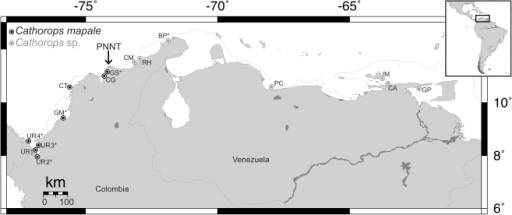 Sampling localities for the Cathorops mapale group along the southern Caribbean.Arrow indicates Parque Nacional Natural Tayrona (PNNT), where the continental shelf is narrower (gray line shows 200 m isobath). UR, Urabá; GM*, Golfo de Morrosquillo; CT, Cartagena; CG, Ciénaga Grande de Santa Marta; GS, Golfo de Salamanca; CM, Camarones; RH, Riohacha; BP*, Bahía Portete; PC, Puerto Cabello; IM, Isla Margarita; CA, Carupano; GP, Golfo de Paria (map from www.aquarius.ifm-geomar.de). *Only morphological material examined from these localities.