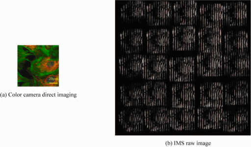 BPAE cells; (a) direct imaging image and (b) IMS raw image. The 11-bit IMS raw image was captured with an integration time of 1 second.
